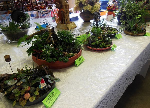 Flower show dish  gardens
