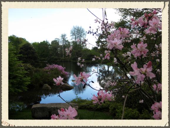 Garden scene in Maine 3