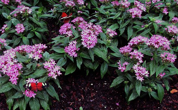 Callaway Gardens pink flowers