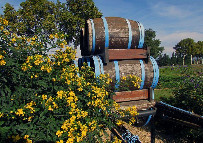 France wine barrels
