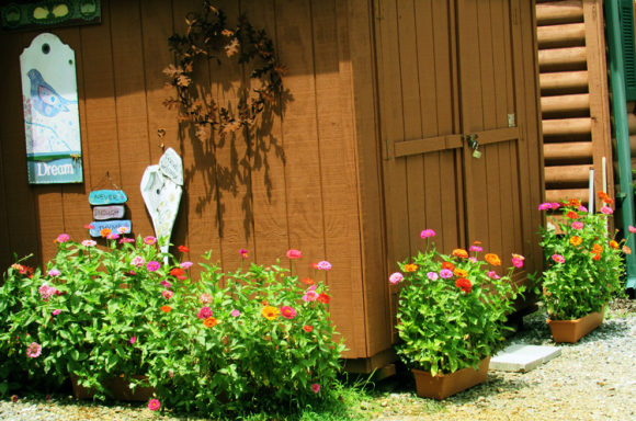 Shed full view of zinnias
