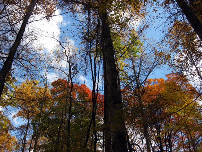 Fall in nc trees with sky