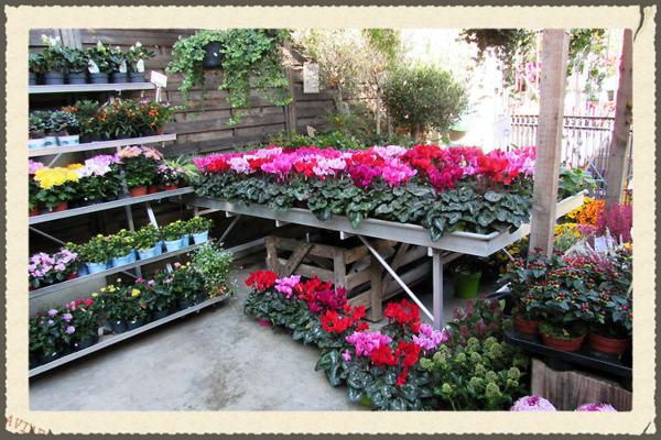 France flower shop pink