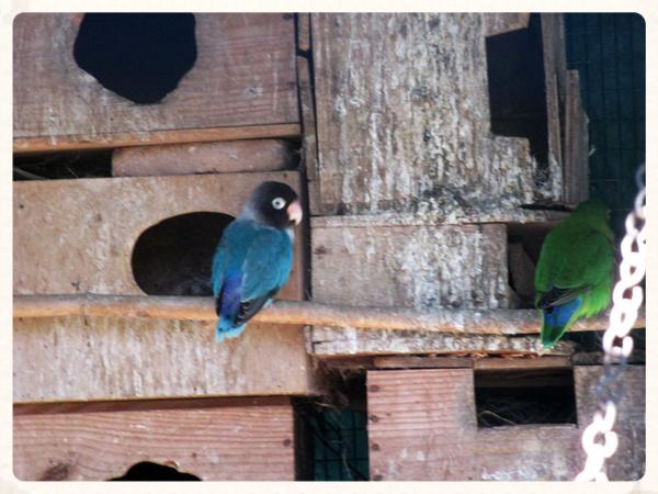 Abbey bird house