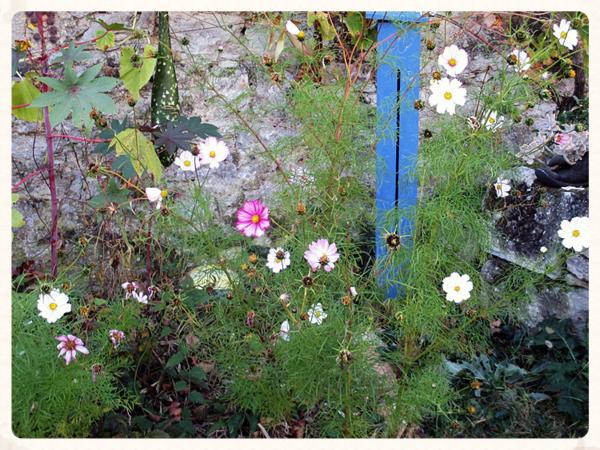 Abbey Garden flowers 2