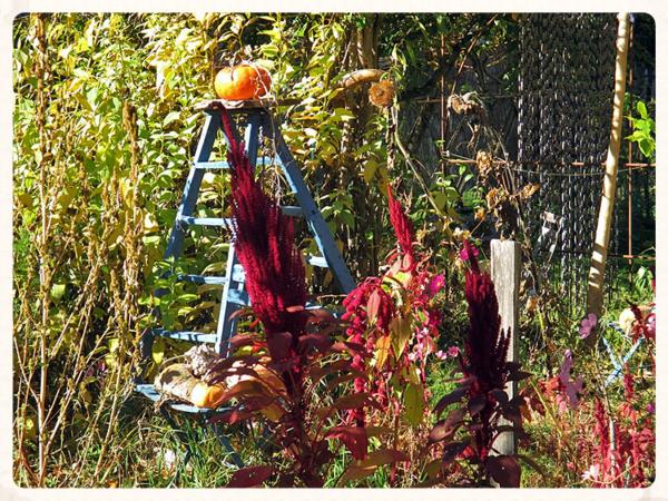Abbey garden stepladder