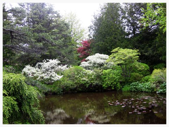 Garden scene Maine 9