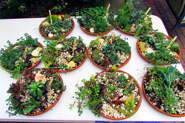 Fgc plant sale