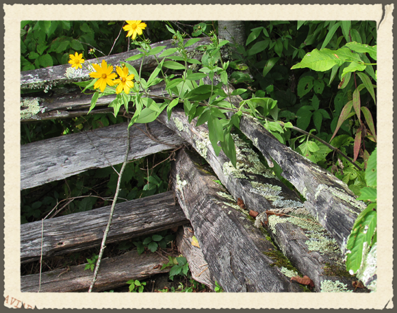 Smnp flowers fence