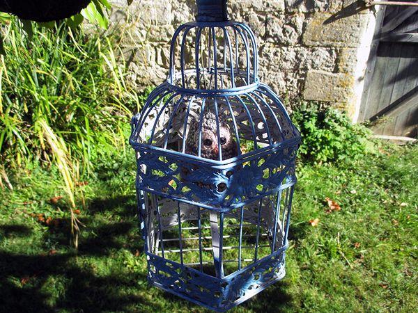 France blue in a garden
