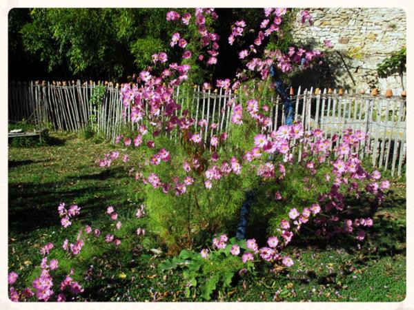 Abbey pink flowers