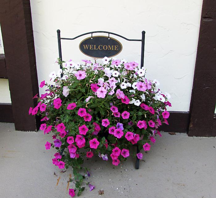 Vac pink flowers welcomejpg