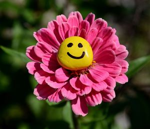 Smiley-face-flower-photos-and-images-for-facebook