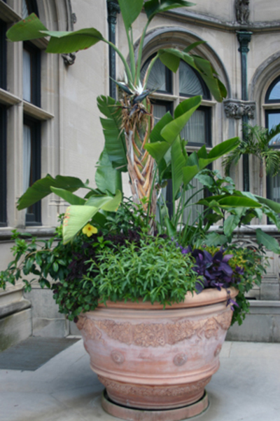 Potted_plant_biltmore