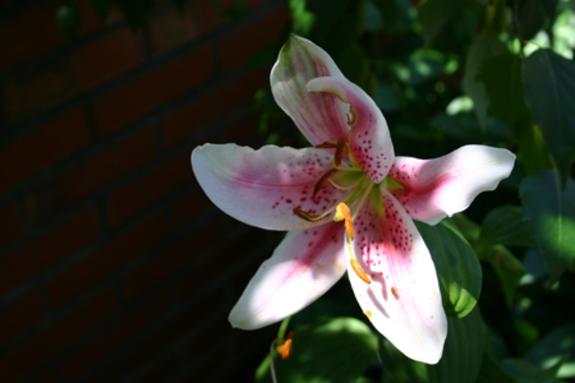 Biltmore_pink_5img_7407_2